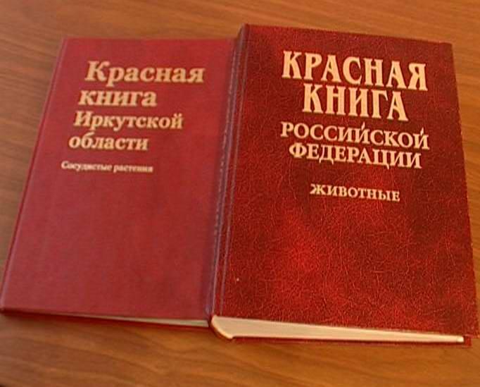 семечки белые каталог цен. b Красная/b b книга/b.